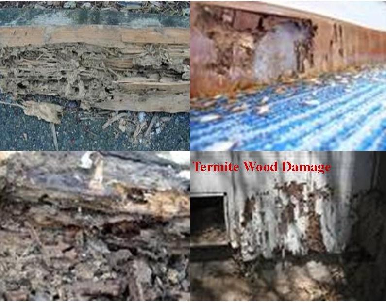 Termite - Termites Inside House
